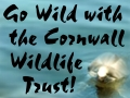 cornwall wildlife